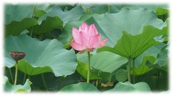 enlightenment-of-buddha-03.jpg